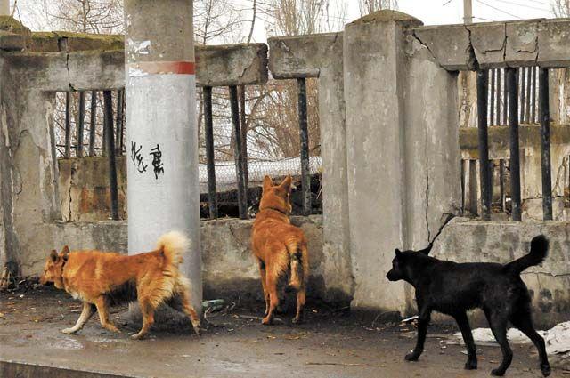 Животные бродят по городу