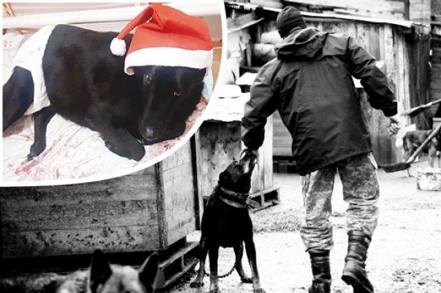 Собака Ночка обитала на территории торговой базы, где её переехал погрузчик. Ветеринары жизнь ей спасли, но функция задних ног не вернулась.