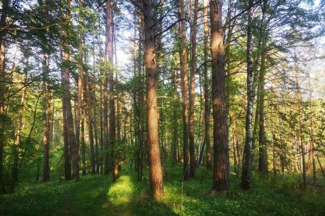 Площадь защитной зоны увеличится почти вдвое и составит 13,5 тыс. гектаров.
