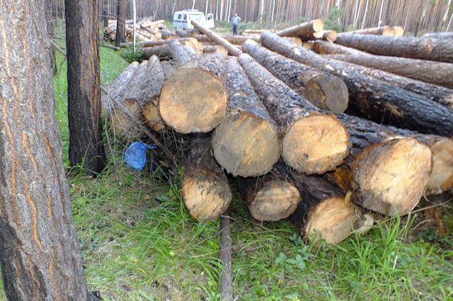 Организатору незаконной заготовки леса присудили четыре года колонии.