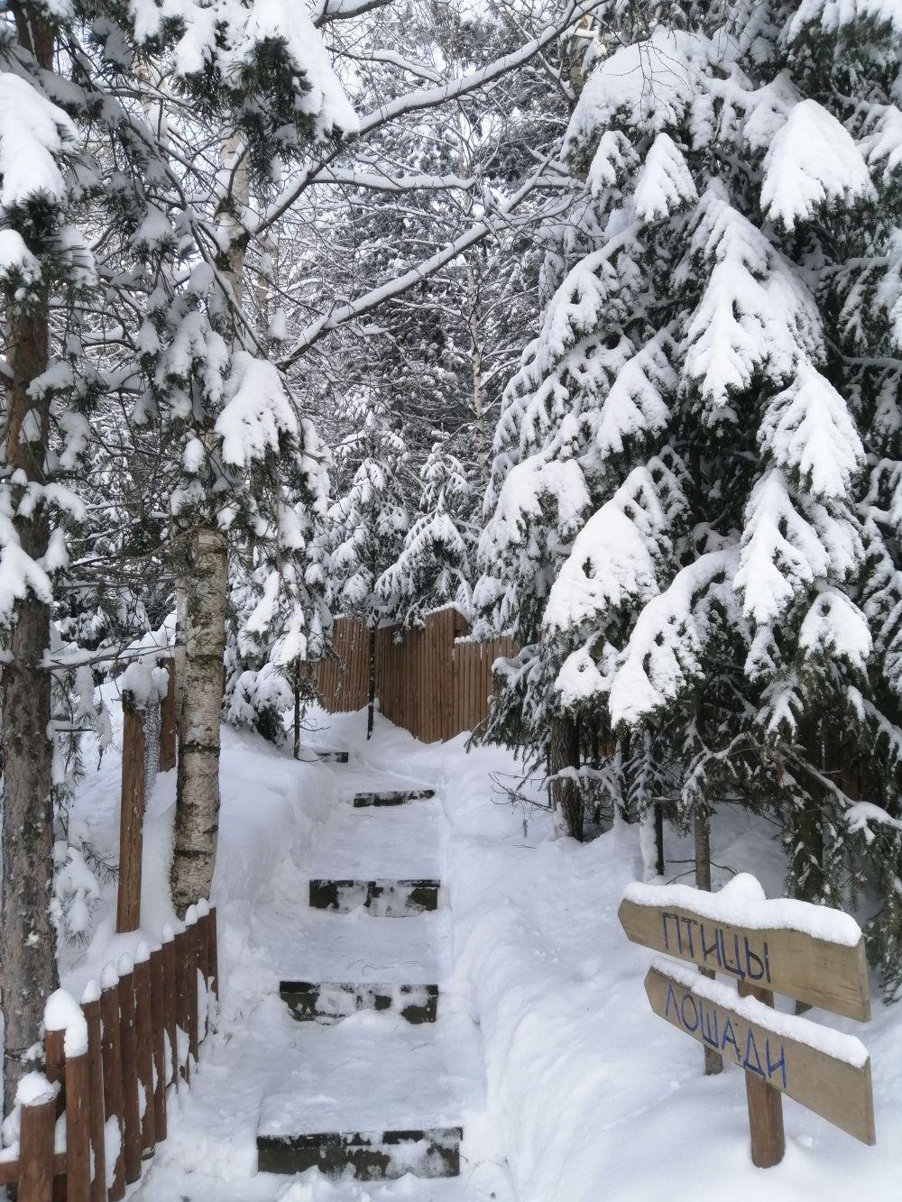 Зимний лес восхитителен: белоснежный снег кругом