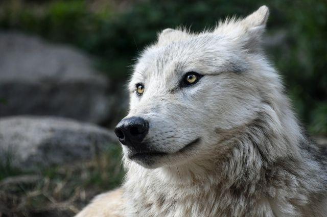 В Минприроды Прикамья подписали приказы, которые должны сократить число диких животных в регионе.