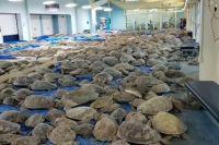Жителям Техаса из-за небывалых морозов пришлось спасать черепах