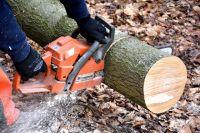 Вальщика леса в Тюменской области придавило деревом к бензопиле