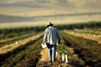 В Украине усилят поддержку фермеров до 35 лет.