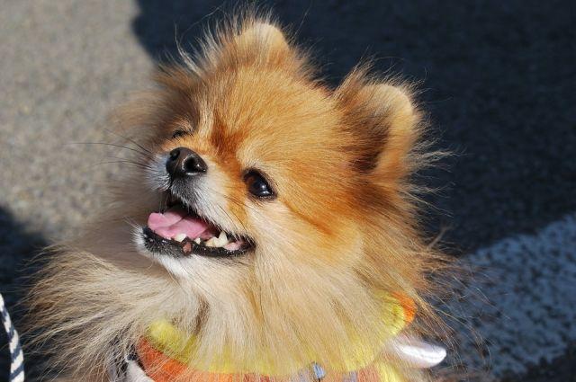 2 собаки и кошка: в Удмуртии могут ввести лимит по числу питомцев в доме