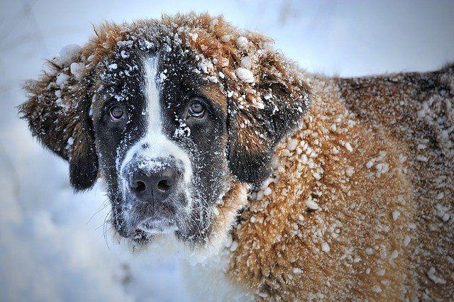 Тюменцам рассказали, как гулять с собакой в мороз