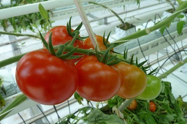 Маленькие хитрости помогут получить хороший урожай.