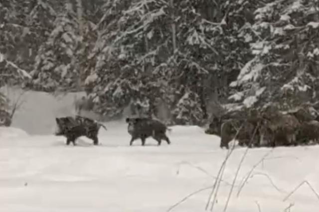 Зимой животным нелегко: голодно и холодно.
