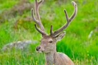 Фактами об этом удивительном животном поделились оленеводы