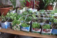 Наступило время сеять рассаду. Земляника, перец, баклажаны – выбор культур на ваш выбор. Не забывайте, что сеять рассаду можно не только овощей, но и цветов.