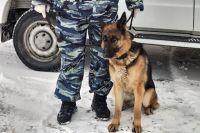 Овчарка по кличке Нивея взяла след похитителя и привела правоохранителей в нужное место.