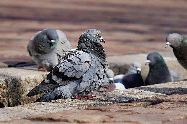 Горожане попросили администрацию решить вопрос с загаженной птицами остановкой