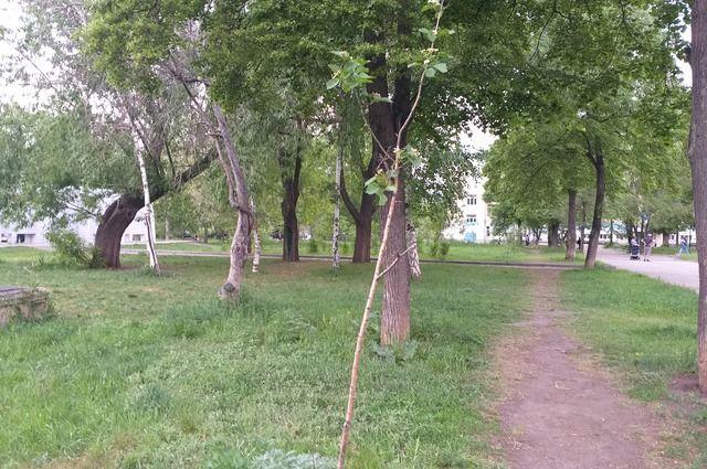 Мы не знаем, в каком районе деревьев достаточно, а в каком надо срочно восстанавливать «зеленый запас»
