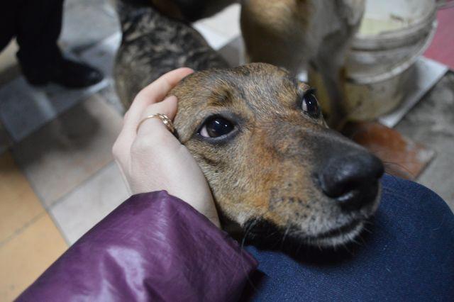 Помощь для животных можно привезти в администрацию Советского округа.