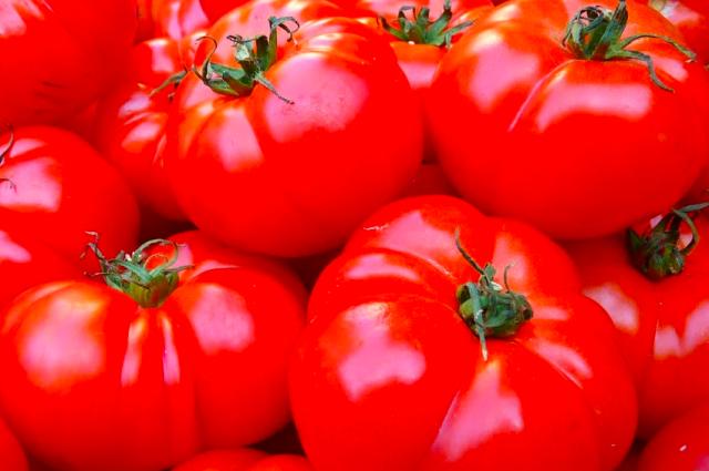 С одного куста при правильном уходе можно собрать два ведра томатов.