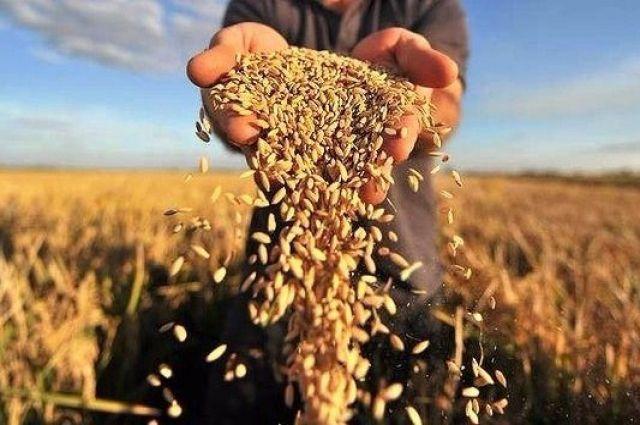 Удар по «скруткам»: что изменит льготный НДС для аграриев