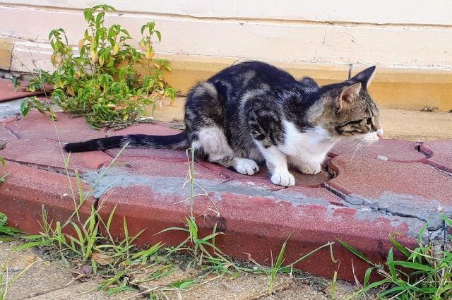 В День кошек тюменцы рассказали о своих питомцах