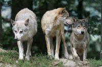 Вступили в силу изменения в правила охоты.