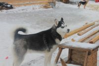 Проблема бродячих собак периодически возникает в самых разных городах Оренбургской области.