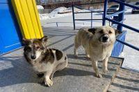 Оренбуржец пытался совершить самосуд над уличной собакой.