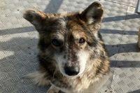 Стрелявшему в бездомную собаку оренбуржцу грозит привлечение к ответственности сразу по двум эпизодам.