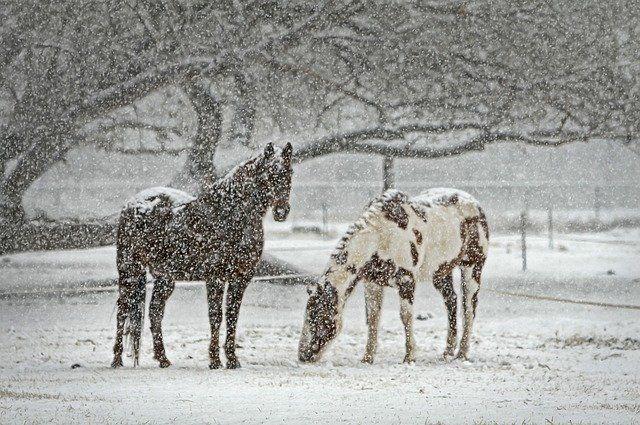 Метеорологи Башкирии прогнозируют в марте больше снегопадов, чем обычно