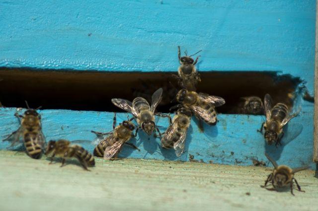 Депутат Госдумы от Башкирии Иван Сухарев: «Нужно защитить пчеловодов»
