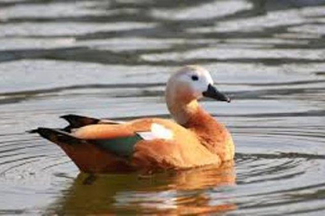 Стала известна причина гибели птиц в заповеднике «Аскания-Нова».
