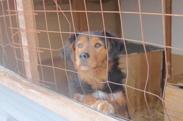 В Оренбуржье остается напряженной ситуация с безнадзорными животными.