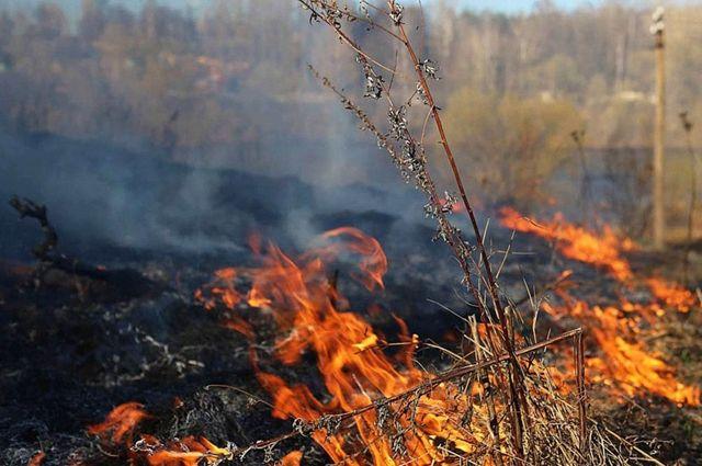 В районах Калининградской области начались палы травы