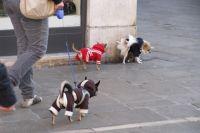 Собаки очень милы, а вот отходы их жизнедеятельности город не украшают.
