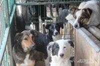 На основе Городской службы по контролю за безнадзорными животными будет создан центр всего зоозащитного движения.