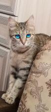 Кот Ирины Казак