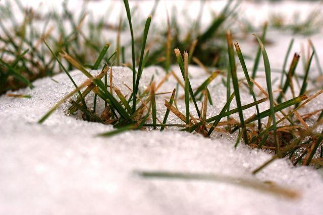В Оренбургской области на 1 марта 37% посевов озимых культур находятся в хорошем состоянии – 316,1 тысячи гектаров.