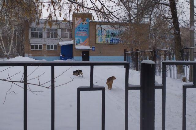 Материалы проверки по вопросу бродячих собак в Оренбурге направлены в региональный Следственный комитет.