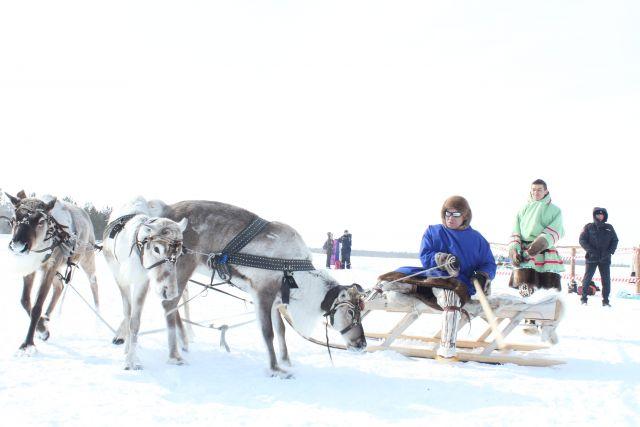Гонки на оленях в Сургутском районе