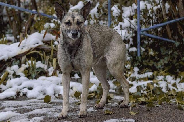 Пострадавшую от укуса собаки маленькую оренбурженку Милану выписали из больницы.