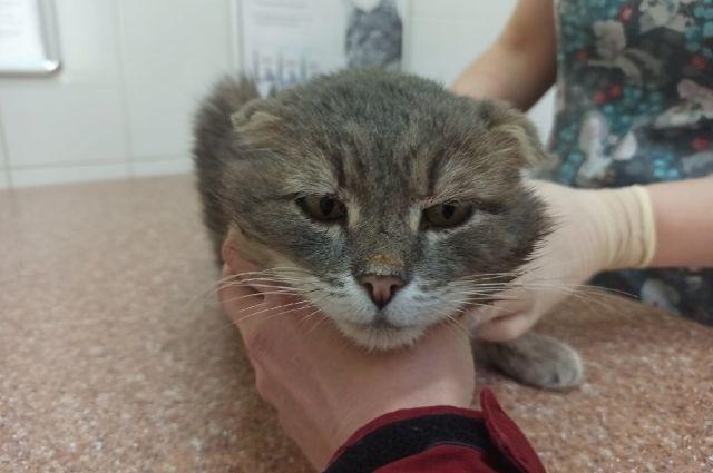 В кота Кузю стреляли, рана загноилась. Но сейчас он на пути к выздоровлению благодаря волонтерам и ветеринарам.
