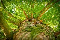 В Оренбургской области за 2020 год восстановили 830 гектаров леса.