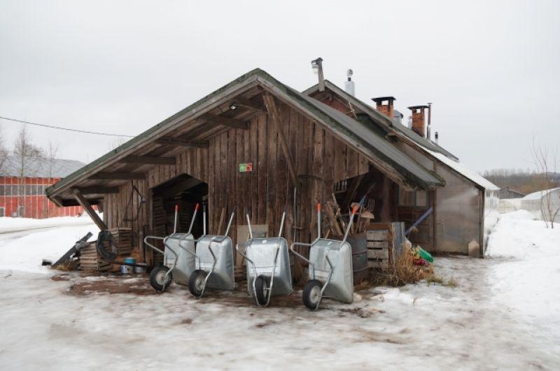 Фермерское хозяйство в деревне велико: 56 га сельскохозяйственный угодий, пасека, коровник на 10 дойных коров, есть куры, поросята, и даже ослик.