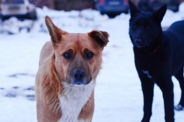 Животные умирали на глазах у детей: в поселке под Оренбургом неизвестные массово начали травить собак.