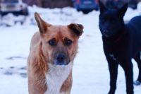 Заявки на отлов безнадзорных животных горожане могут оставлять по телефону 7-03-08