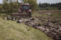 Псковские фермеры просят вернуть им субсидии на мелиорацию и расчистку десятилетиями пустовавших земель.
