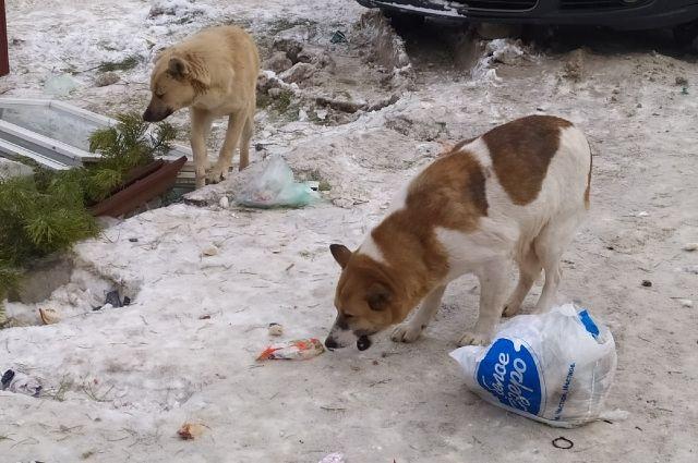 В Оренбурге установили личность мужчины, стрелявшего в собаку в одном из дворов.