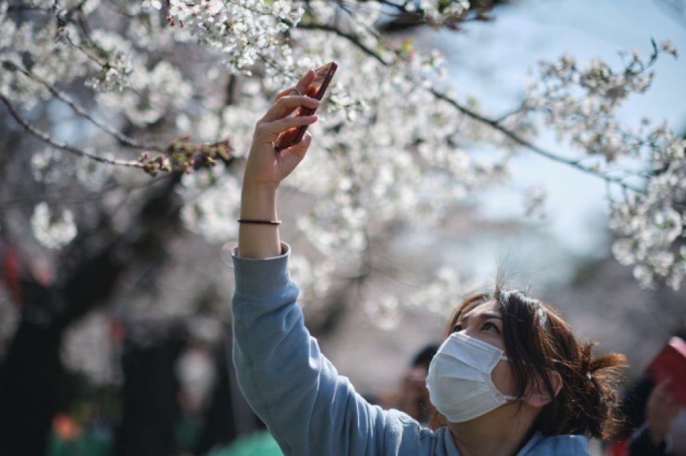 Одно из самых известных мест ханами в Токио — национальный парк Синдзюку-гёэн.