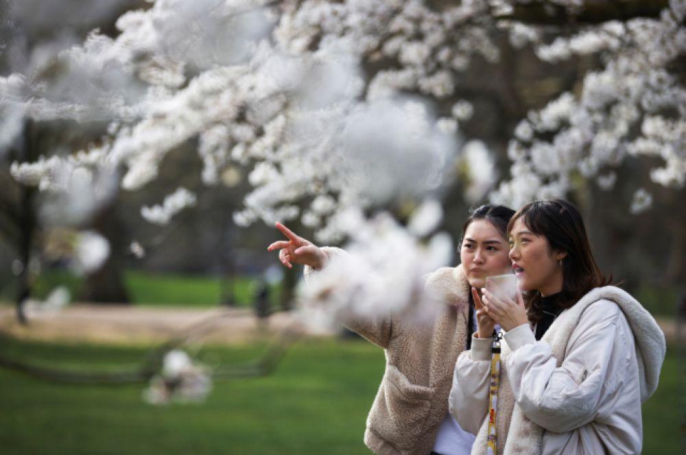 Две девушки под цветущим деревом.