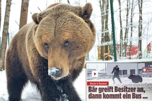 Молодая медведица Машон сбежала из вольера гостиницы «Европа»