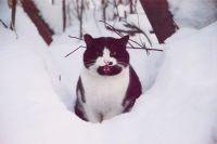 За зиму из города вывезли около 250 тысяч кубических метров снега