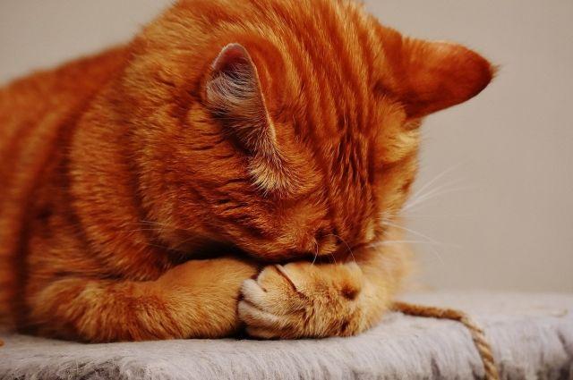 В Удмуртии спасли кота, два дня просидевшего на столбе линии электропередач